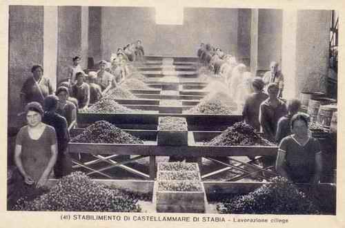 """Fig. 4 - Cirio, lavorazione delle ciliegie nello stabilimento di Castellammare di Stabia. Foto """"Flotti di luce"""" dalla collezione privata C. Vingiani."""